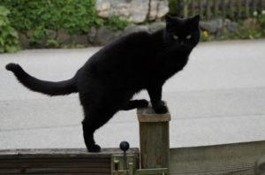 Спасатели Новороссийска сняли кошку с опоры ЛЭП