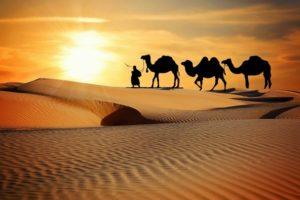 В горах Новороссийска искали караван верблюдов