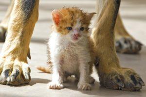 Новороссийские спасатели достали котенка из ливневки