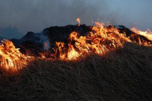 В Новороссийске горела трава на площади 400 кв. м.